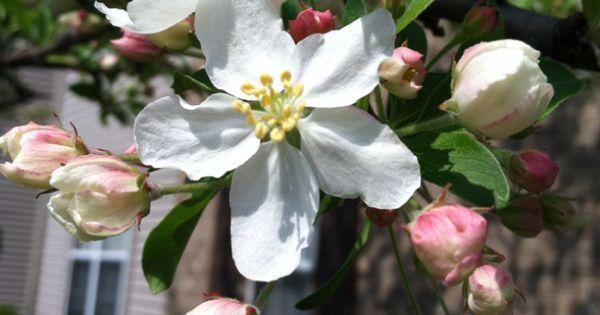 flowers columbus ohio free delivery