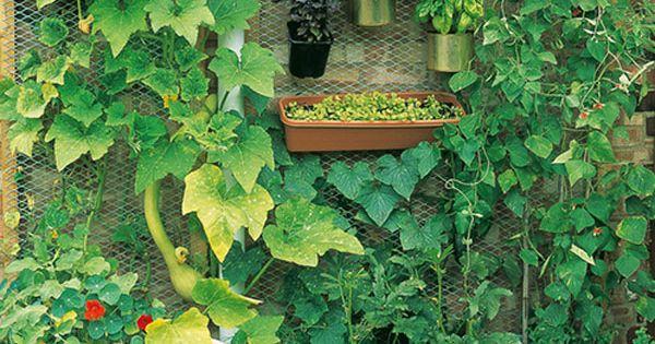 15 unusual vegetable garden ideas gardens vertical for Unique vegetable garden ideas