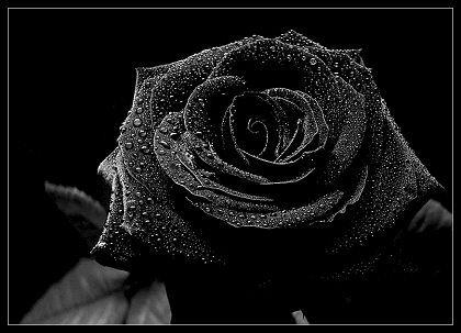 Black Rose Segundo O Significado Das Rosas A Rosa Negra Representa Separacao Black Rose Black Glitter Wallpapers Black Roses Wallpaper Black Phone Wallpaper