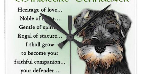 Miniature Schnauzer Puppy Heritage Square Wall Clock Zazzle Com Miniature Schnauzer Puppies Schnauzer Puppy Puppies
