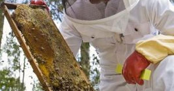 Grants for beginning beekeepers beekeeping bees and bee keeping - Beekeeping beginners small business ...