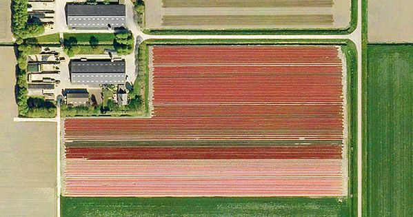 Dutch Flower Fields Seen From Above // Mishka Henner