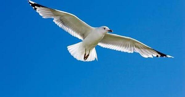 Hasil Gambar Untuk Burung Merpati Putih Burung Gambar Merpati