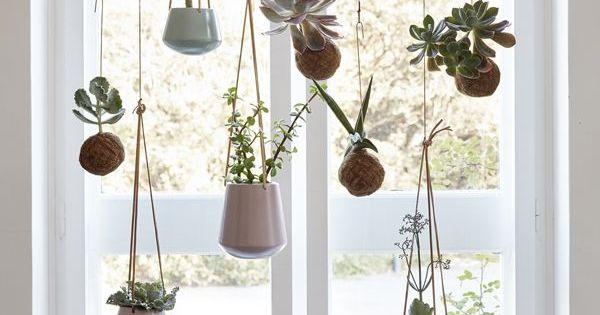 Beste Slaapkamer Plant : Indoor and Plants on Pinterest