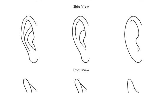 how to draw ears on a portrait