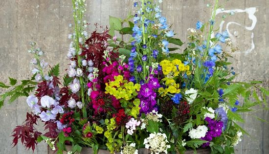 Rebel Rebel large country garden design using the delphinium at New Covent