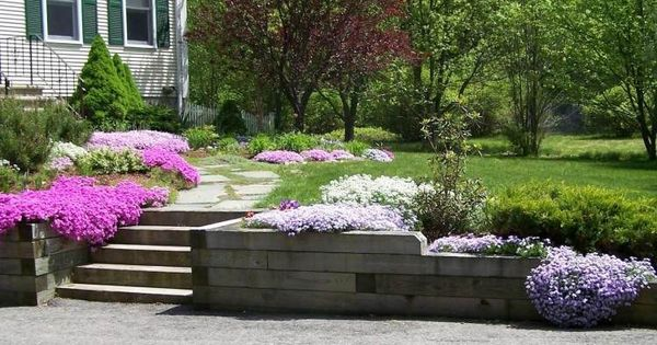 Plantes couvre sol croissance rapide dans le jardin for Le jardin moderne