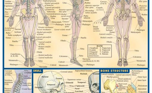 Anatomy for medical coding