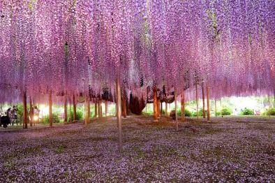 Tree Symbolism And Meanings Symbols Interpretations Wisteria Tree Beautiful Landscape Photography Tree Photography