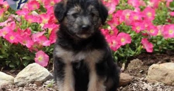 Puppy Finder Find Buy A Dog Today By Using Our Petfinder Buy