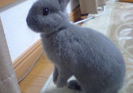 Cutest and Most Popular Breeds of Rabbits As Pets pet rabbit