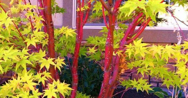 Jardin Feng Shui Quelle Plante Pour Chacun Des 5 L Ments L Ment Feu Tiges Et Les Plantes