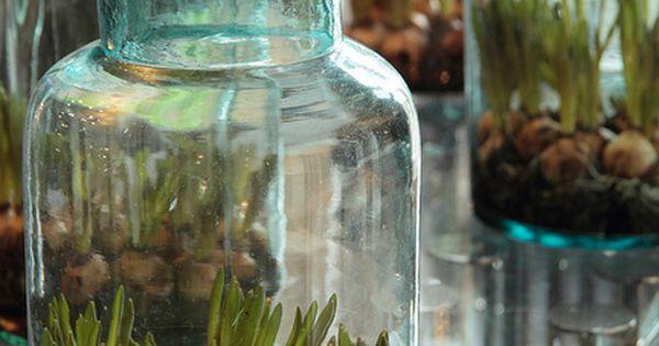 Bloembollen in glazen potten, mooi voor binnen en buiten. Yep.whatever..get it?