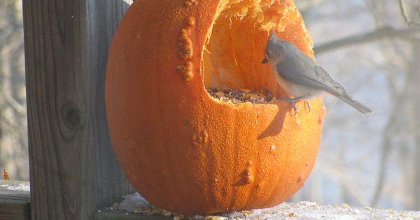 vogelvoer pompoen. leuk om te maken rond halloween