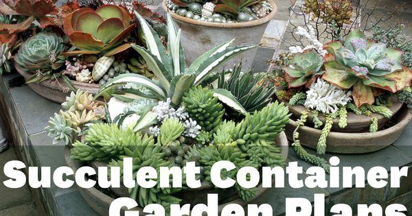 Some insanely pretty succulent gardens for inspiration, and some of these garden