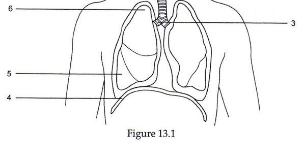 Anatomy labeling worksheets