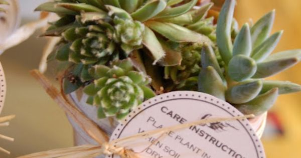 Succulent Favors With Care Instructions Tag Party