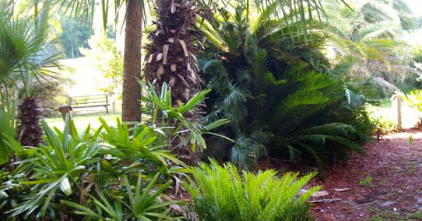 The rainforest garden palm and cycad arboretum in - Botanical gardens jacksonville fl ...