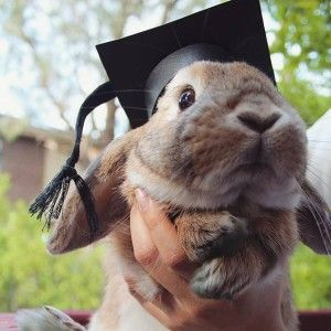 Clicker Training Your Rabbit Yes You Can Rabbit Honey Bunny