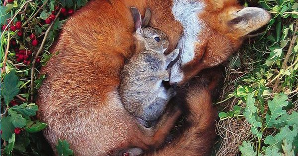 fox and bunny by Max Kimber ( from her un-taxidermy series)