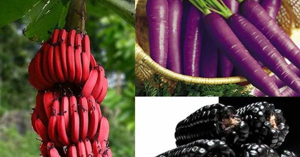 Red bananas, purple carrots and corn. | Crazy - Oddities ...