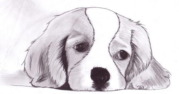 Dessins d 39 animaux trop mimi drawing pinterest trop mimi mimi et dessin - Petit quick coloriage ...