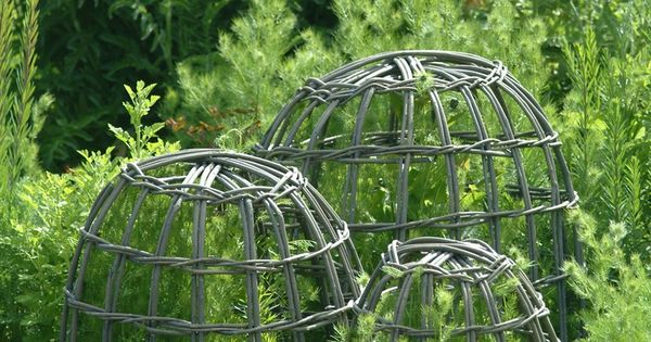 Willow Garden Cloches Protect Plants From Animals And Or Provide Support To Plants That Need A