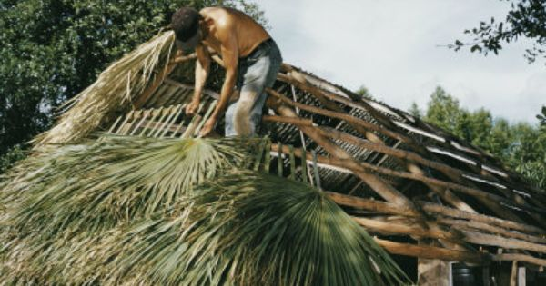 Palm Thatch Roof Discussing Palm Trees Worldwide Palmtalk