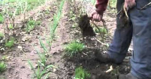 Homesteading and living off the grid homesteading for Garden pool doomsday preppers