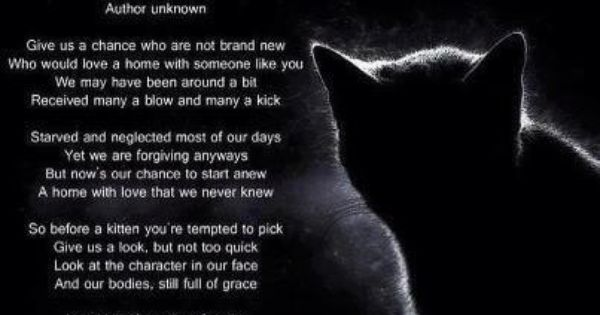 Consider A Secondhand Cat For Your Next Pet They Are So Wonderful 3 Cat Poems Pet Poems Cat Shelter