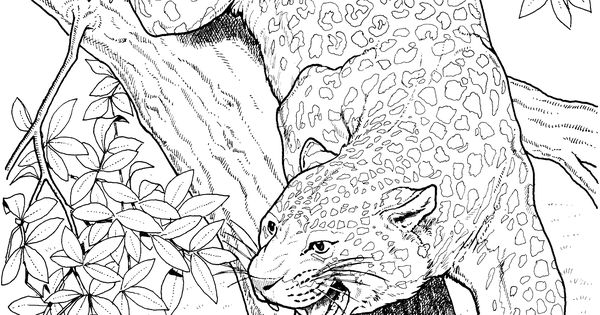 coloring pages bigcats - photo#49