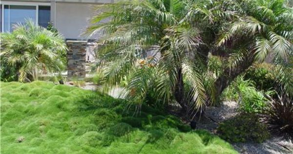 This Sward Of Asian Ornamental Grass Needs No Mowing And Requires Far Less Water Than
