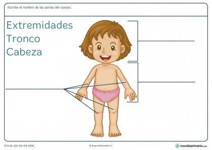 Fichas Para Imprimir Para Niños De Primaria Partes Del