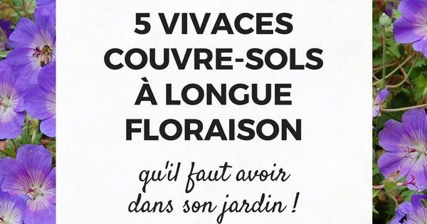 5 vivaces couvre sols longue floraison qu 39 il faut avoir voitures - Fleurs vivaces longue floraison ...