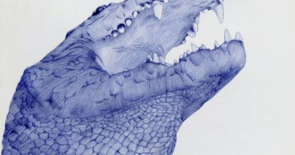 Stunning Animal Portraits Drawn with a Bic Pen illustration drawing animals