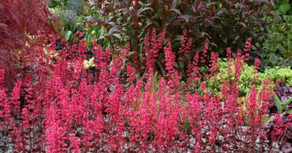 Heuchera Rave On With Images Heuchera Plant Breeding Garden Inspiration