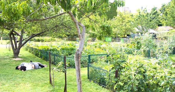 Pour une balade ombrag e sous les haies de vignes ou pour for Le jardin de catherine