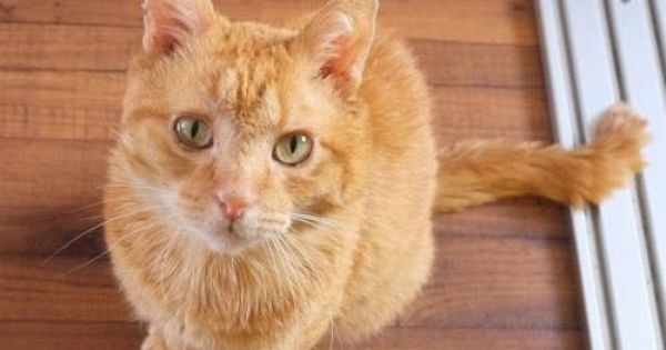 I M Spirit From West Coast Dog And Cat Rescue In Eugene Oregon I M A Golden Years Guy Probably Around 8 And I Was Found Be Cat Rescue Animal Projects Cats