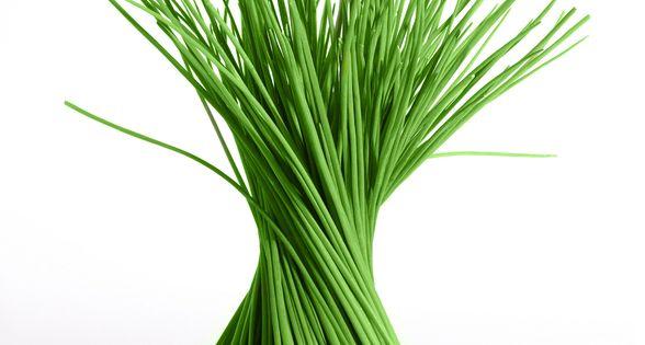Ciboulette ciboulette cultivado en casa - Cultivo de hierbas aromaticas en casa ...