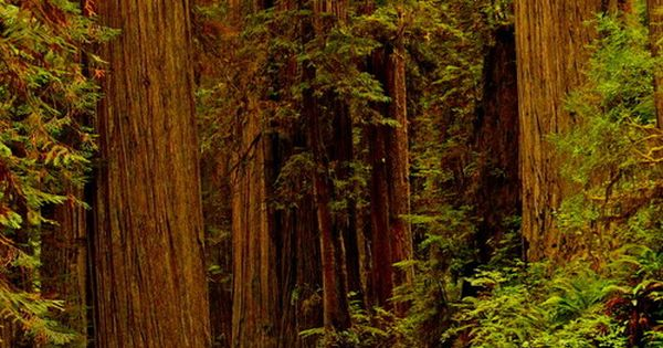 Hiking trail in redwood national park, California | From GuessQuest collection Garry