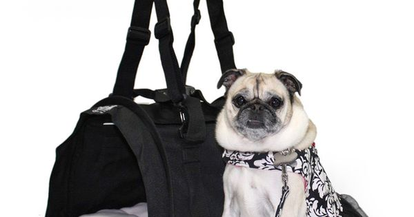 Sturdibag large a plane small dogs and pet carriers for Small dogs on airplanes