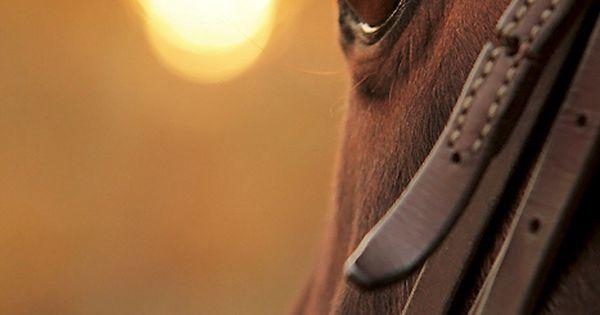 Equestrian quote