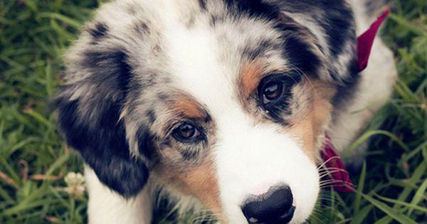 Dog - Puppy eyes