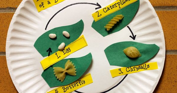 Science: Butterfly life cycle with pasta