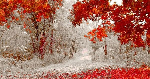 First Snowfall, Duluth, Minnesota while trees are full of beautiful Fall leaves!