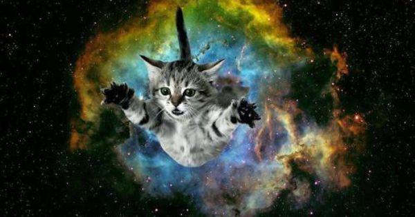 Cat Bursting From Galaxy Background Galaxy Pinterest