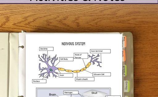 Nervous System: Course Notes Essay