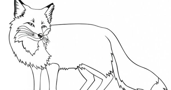 Fox Coloring Pages Pictures Animal