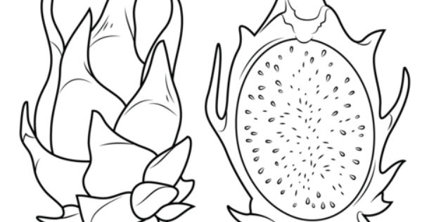 Dragon Fruit And Its Cross Section Coloring Page Desenhos Para