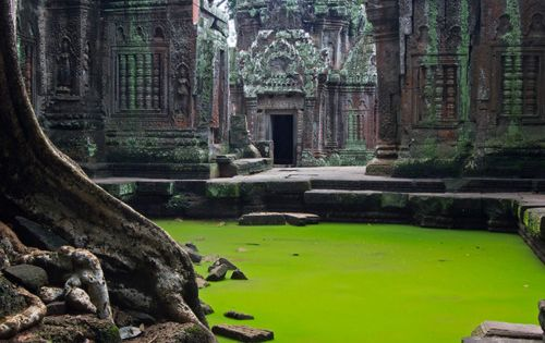 Ta Prohm Temple, Cambodia.